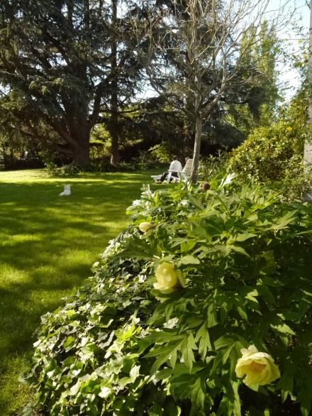 L'après-midi dans le jardin