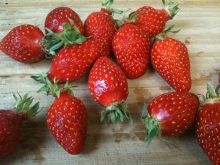 ce sont des fraises gariguettes