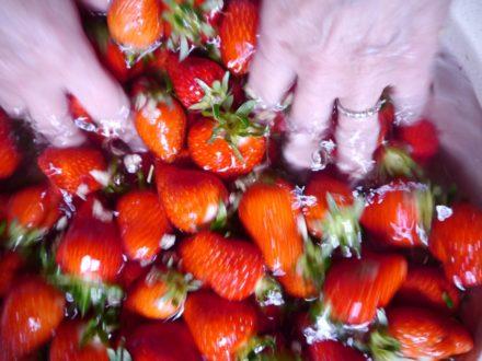 ①いちごはヘタ付きで、まず洗いましょう。ヘタを切ったあとで洗うと、損傷がはげしく、美味しさも逃げてしまいます。